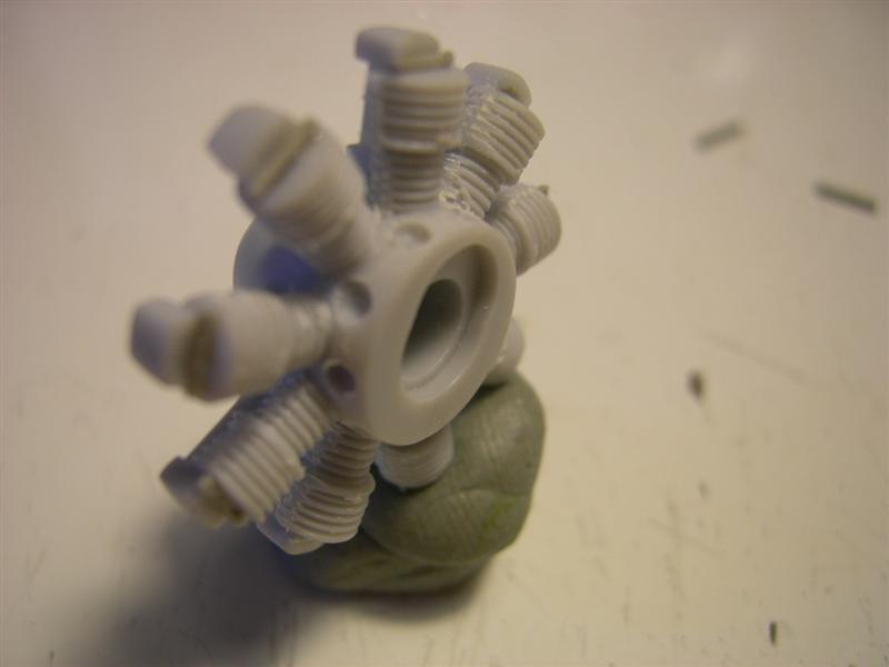 WALRUS4003Medium.jpg